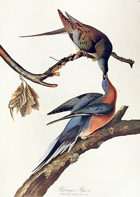 http://carnot69.free.fr/images/Pigeons.jpg
