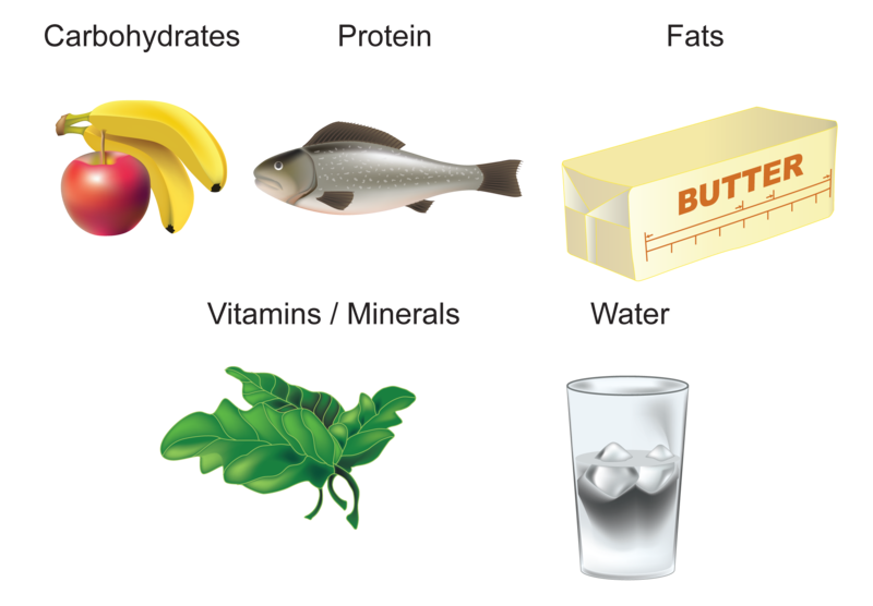 o recorded intake of protein carbohydrates and lipids Even though you need fat, it has more than double the amount of calories in carbohydrates and protein fat has 9 calories per gram, so if you adhere to a 2,000-calorie diet, you'll need 44 to 77 grams of fat each day.