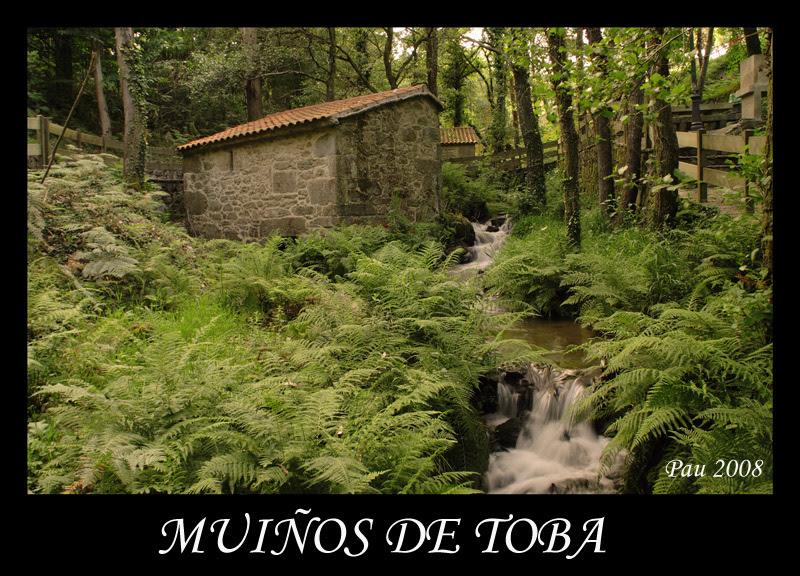 MUIÑOS DE TOBA