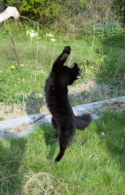 Wilder kitten