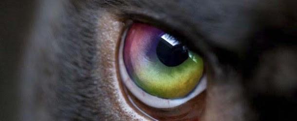Las sorprendentes habilidades psíquicas de nuestras mascotas