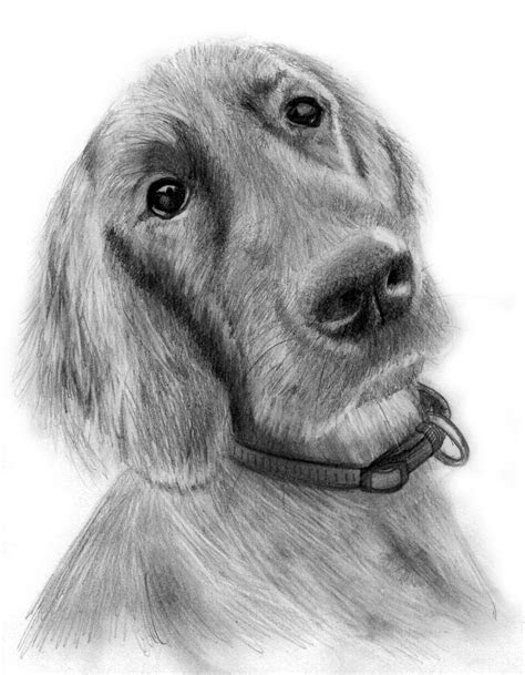 drawings  dog clipartsco