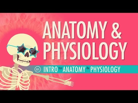 Introduction to Anatomy & Physiology: Crash Course A&P   Billy is ...