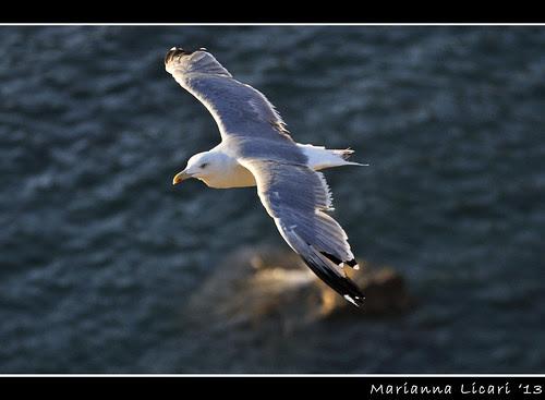 Fly (In Volo) by via_parata