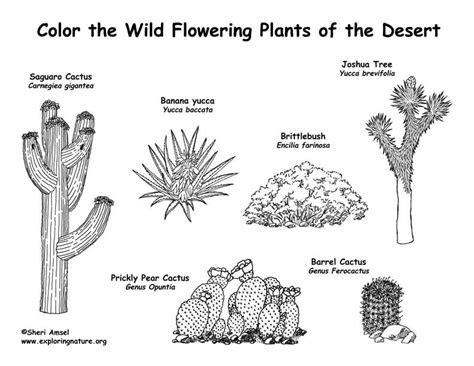 coloring desert picture  coloring pages