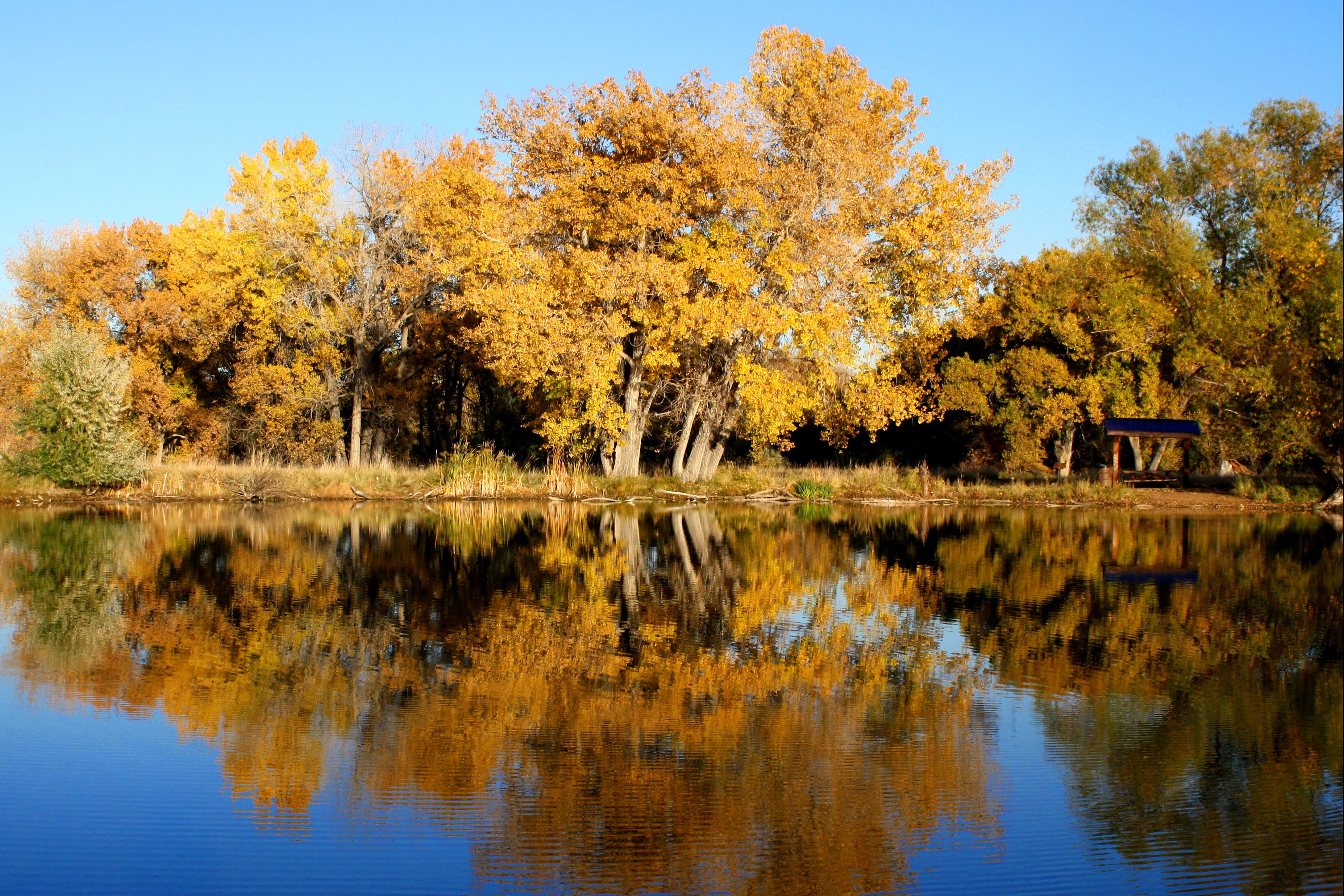 Fall Trees Reflected In Lake Picture Free Photograph Photos