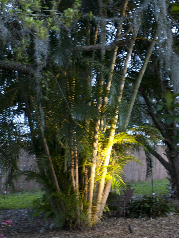 Landscape Lighting for Palm Trees and Florida Outdoor Landscapes