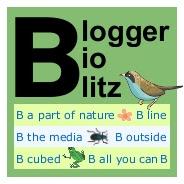 Blogger BioBlitz mini logo, bird-free