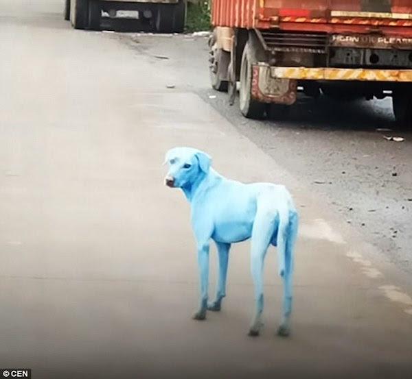 perierga.gr - 8 παράξενα χρωματισμένα ζώα...