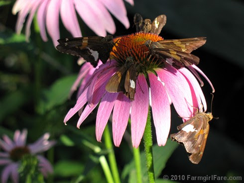 Pollinator Party 1