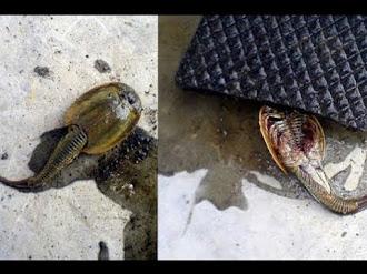 ¿Qué es ese extraño animal encontrado en un pozo abandonado de Rusia? #GHFILES