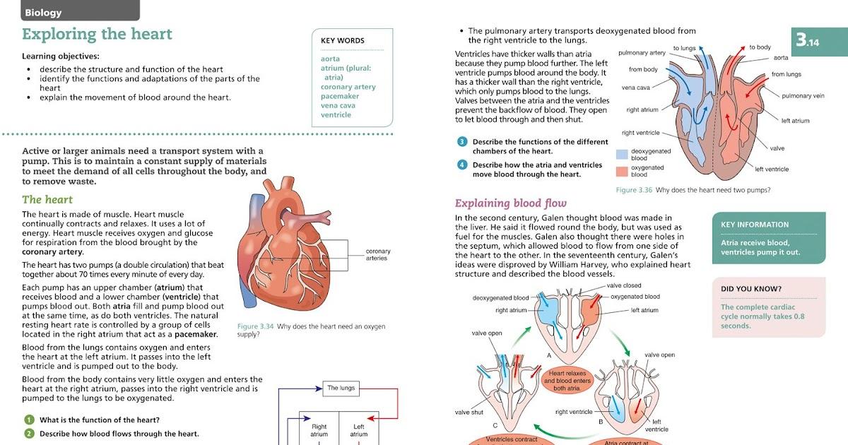 heart: Heart Diagram Gcse Biology