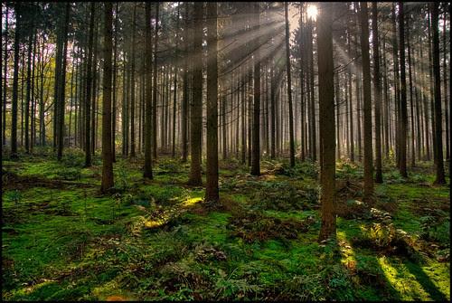 Magic! between the trees