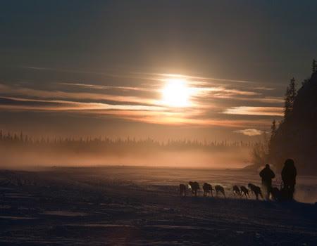dog sledding into sunset