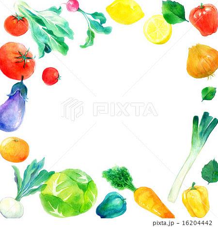 野菜フレーム 正方形のイラスト素材 16204442 Pixta