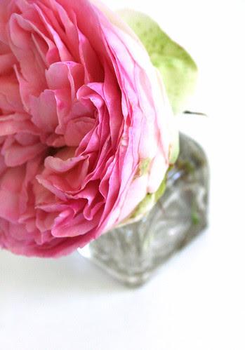 rose2