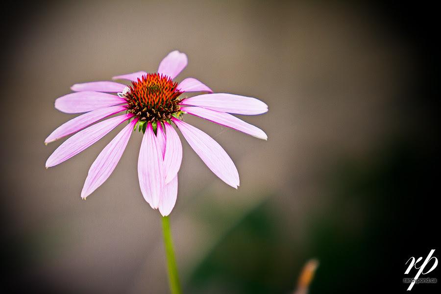 ~ 247/365 Flower ~