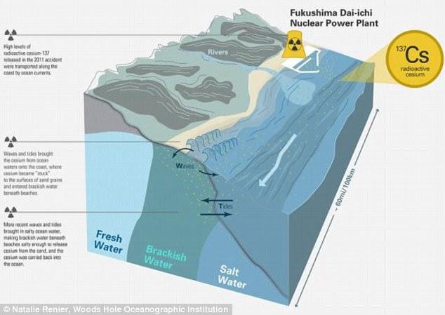 Καθώς τα κύματα και οι παλίρροιες έφεραν το υλικό στο έδαφος, το έδιναν στις επιφάνειες των κόκκων άμμου.  Με την πάροδο του χρόνου, απορροφάται αργά στο νερό, καθώς η εισροή αλμυρού θαλασσινού νερού από τον ωκεανό επιτρέπει στο υφάλμυρο νερό να απελευθερώσει το καίσιο.  Αυτό απεικονίζεται παραπάνω