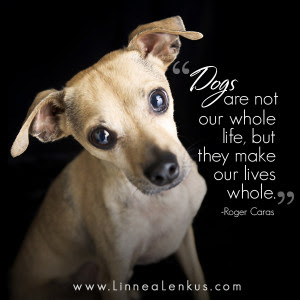 Inspirational Dog Quotes. QuotesGram