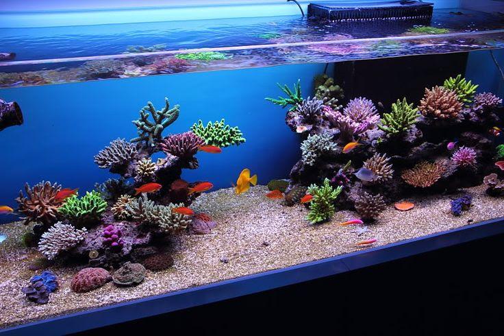 Aquascape Ideas Reef Aquascaping