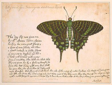 Emerald moth (Urania leilus)