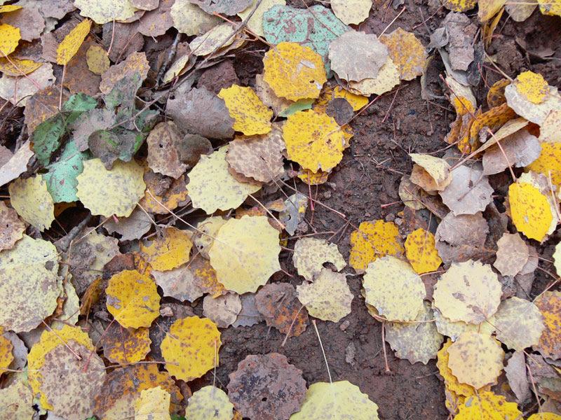 Karagöl Sonbahar Yaprakları Deretepenet