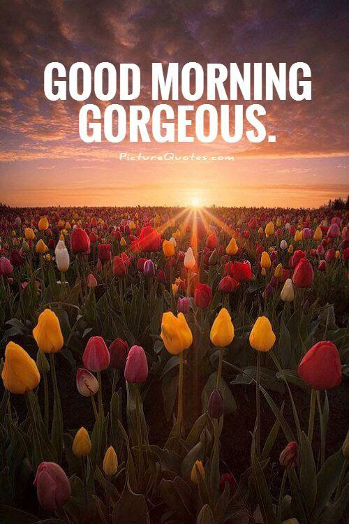 Good Morning Gorgeous Picture Quotes
