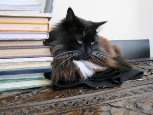 bookish-cat-zoom