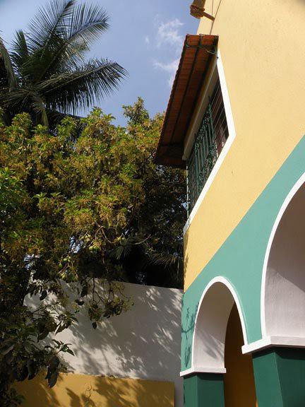 avocado tree at entrance