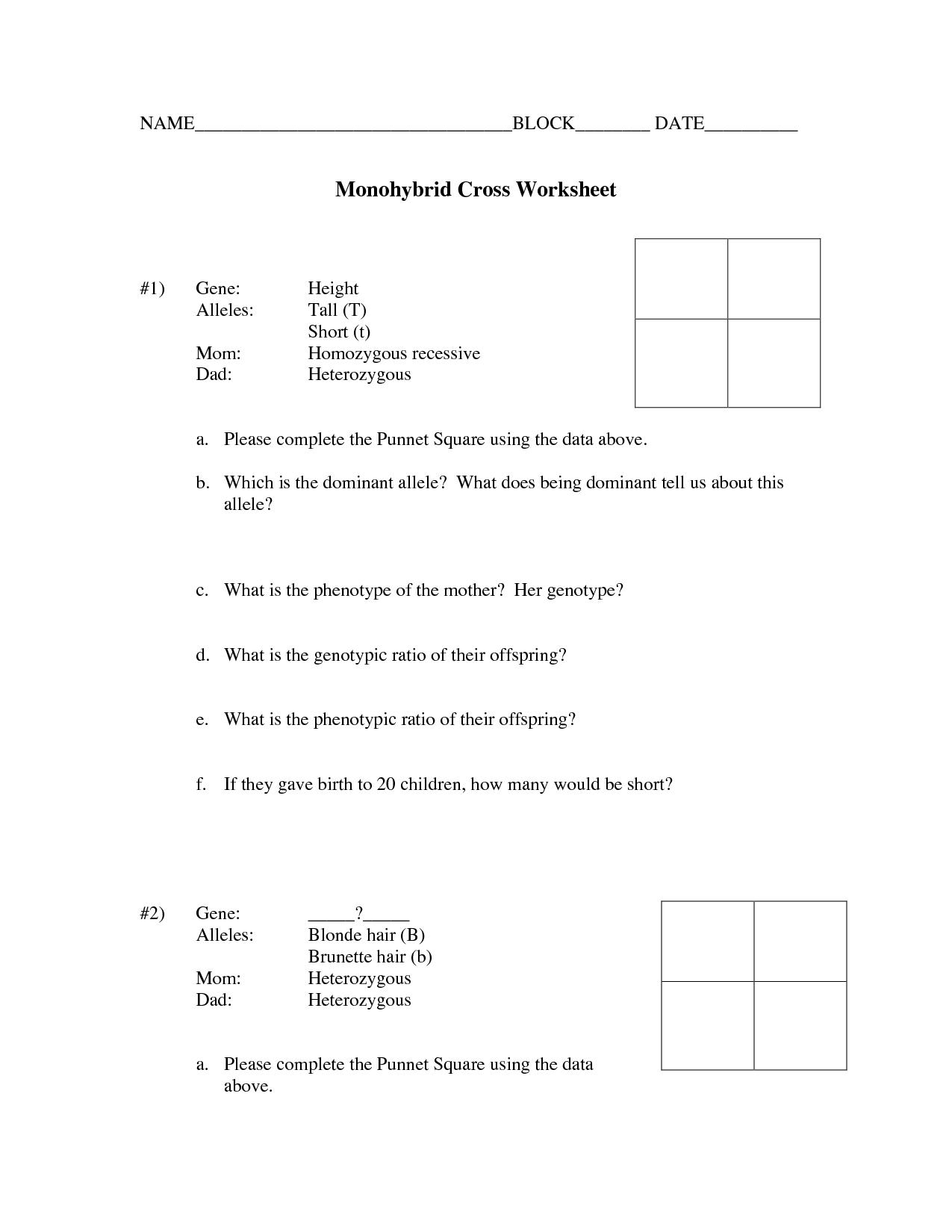 33 Monohybrid Crosses Practice Worksheet Answer Key ...