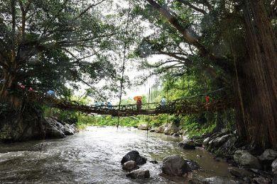 اغرب جسر - جسر الشجرة