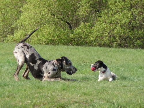 Hunde Spiele Kostenlos Runterladen