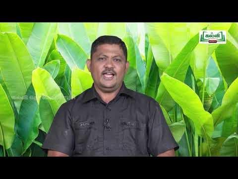 முப்பரிமாணம் Std 12 TM Bio Botany தாவர திசு வளர்ப்பு Part 01 Kalvi TV