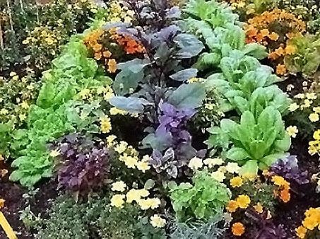 Combinar hortalizas y flores 2