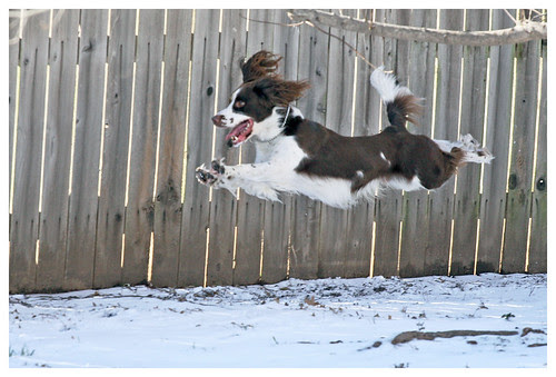 Darwin the Flying Dog
