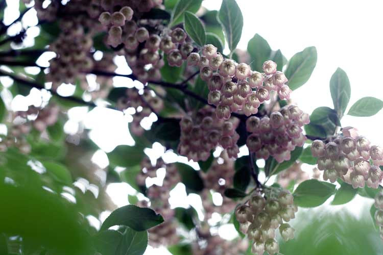 trees-may5