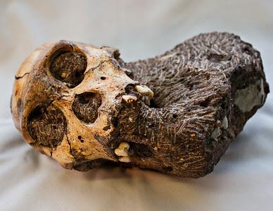 Karabo Skull (A.sediba)