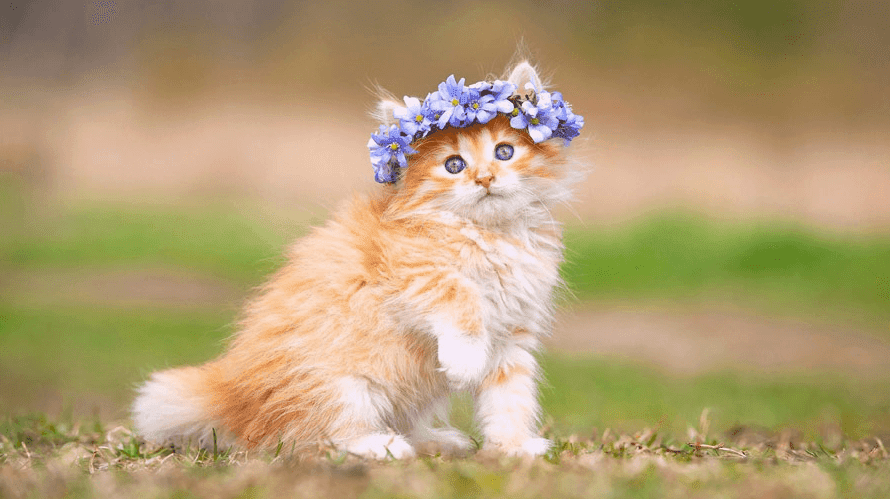 Cute Cat Pictures Hd Wallpapers Download Blog Wall Decor