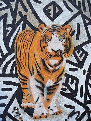 tigre 1.jpg