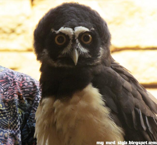 Animal Kingdom owl