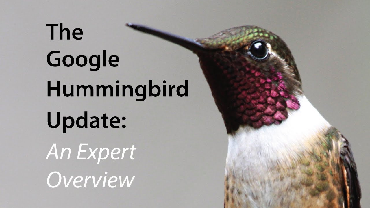 Should You Change Your SEO Strategies In Light of Google Hummingbird?