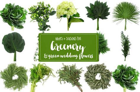 The Essential Guide to Greenery for Weddings   Green
