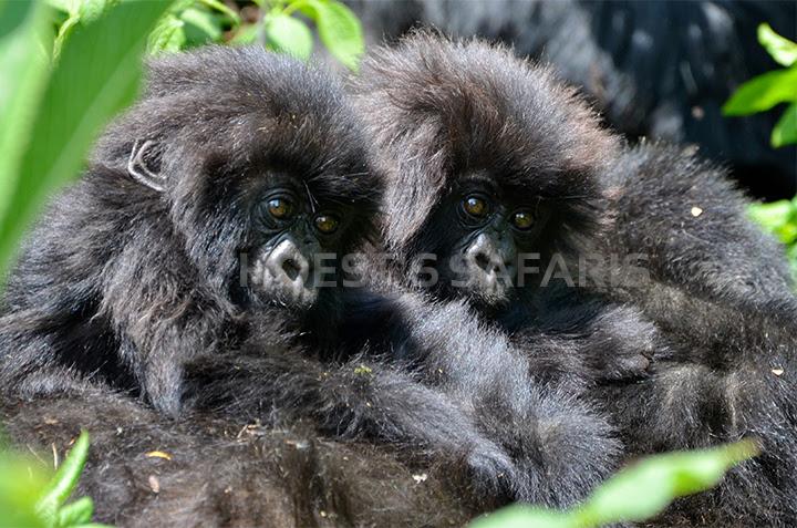 6 Days Gorillas in Bwindi, Bwindi Gorilla Trekking