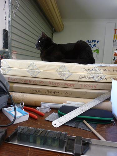 Paperstackcat