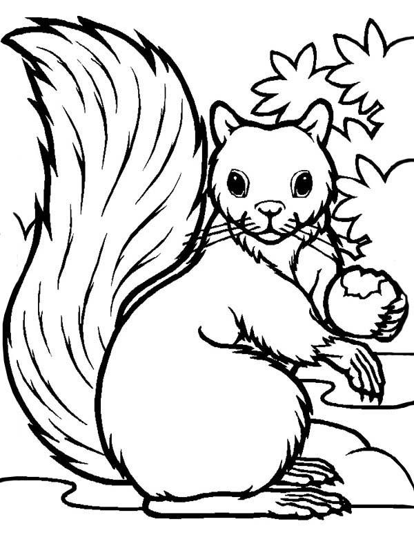 Squirrel Coloring Pages Preschool - Coloring Page Photos ... | 800x600