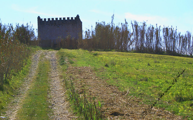 Torreao52012f