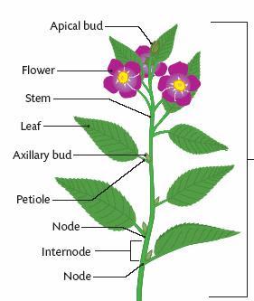 flower stem 1