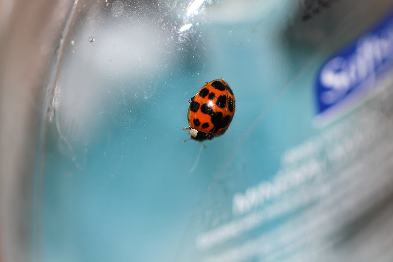 ladybug on handsoap5