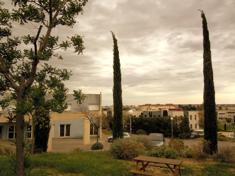 cyprès arbres