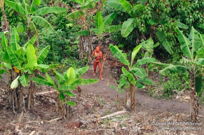 last uncontacted tribes03 650x432 Breathtaking photos of one of the worlds last uncontacted tribes